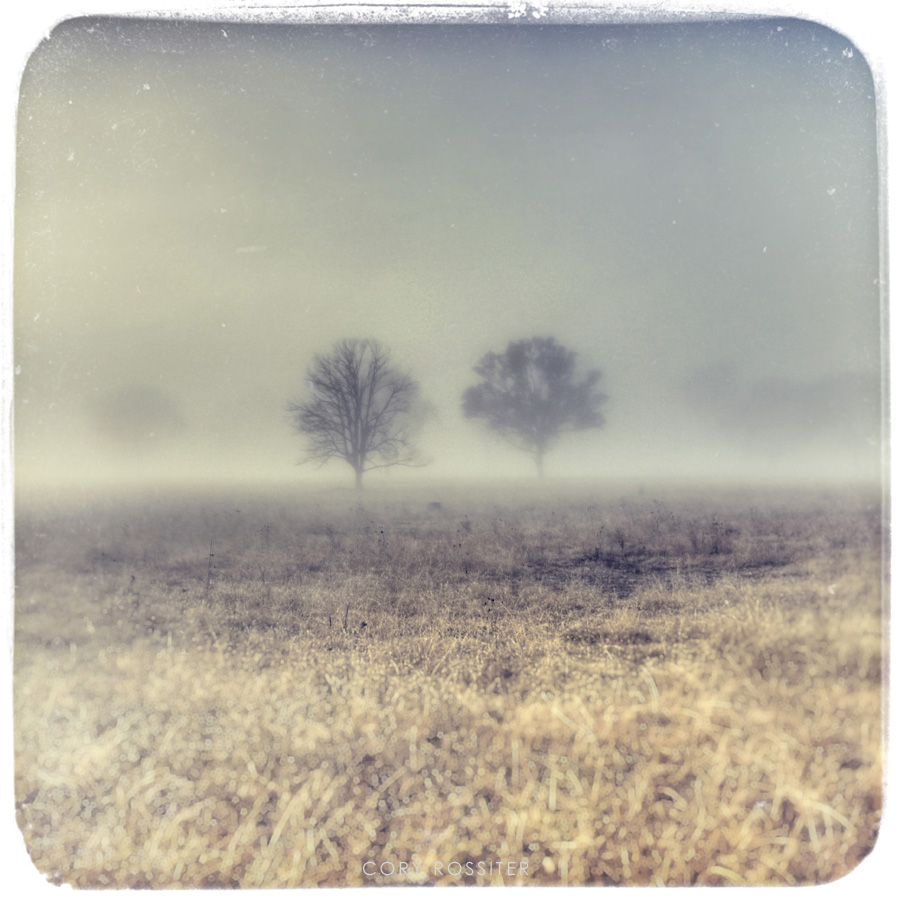 Two Trees on a misty morning