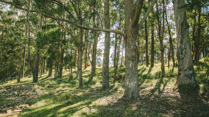 Zoe & David wedding @ Spicers Peak Lodge Maryvale SE Queensland Wedding Photography by Cory Rossiter -2