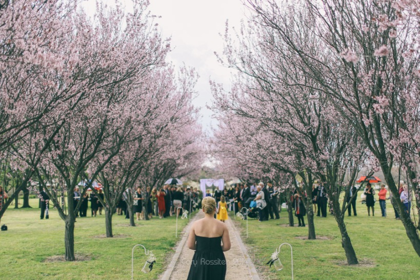 Angela_Paul_wedding_in_teneterfield_NSW_by_cory_rossiter_photography_design-20